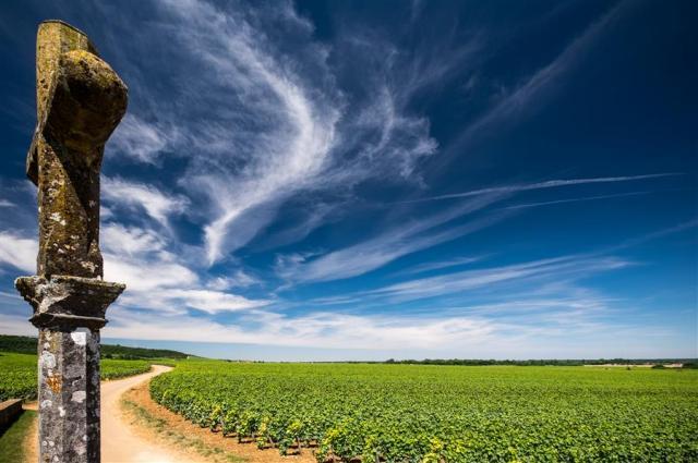 DRC cross & vineyard